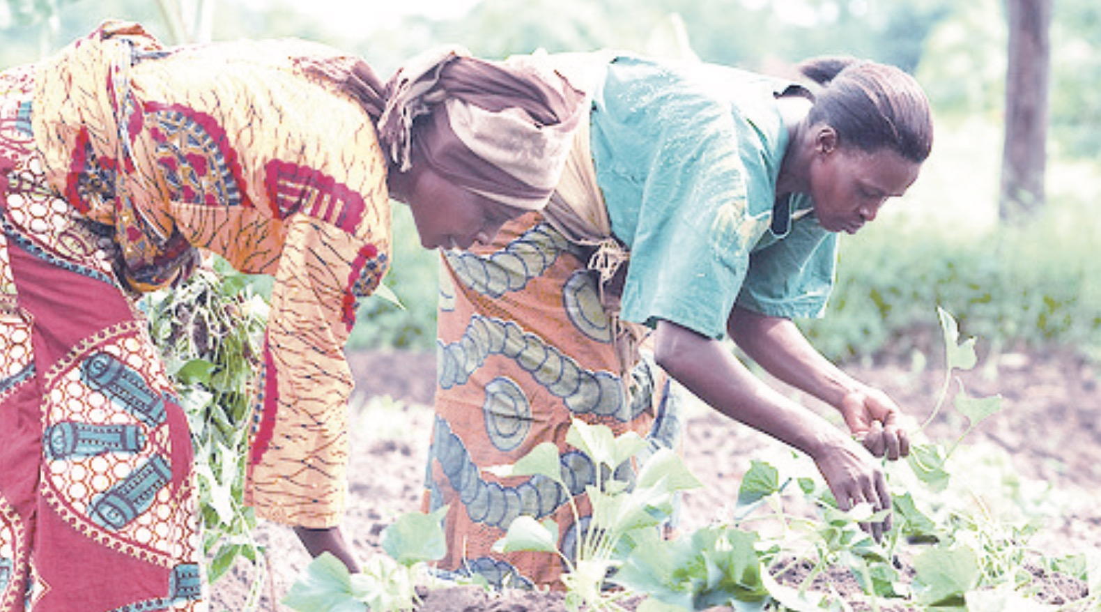 Photo of Chongwe farmers refunded