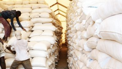 Photo of SUBSIDISED MAIZE SHORTFALL TRIGGERS MEALIE-MEAL SHORTAGE