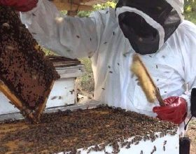 Photo of Mkushi Trust taps into bee-farming