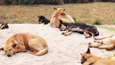 Photo of Dogs abandoned in cemeteries